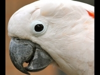 cockatoo_-_hello_is_someone_there_-_youtube