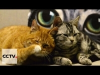 alternative_medicine_kittens_help_australian_students_cope_with_stress