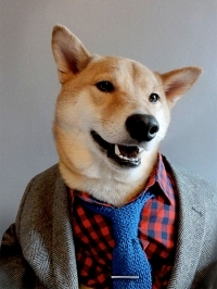 menswear_dog