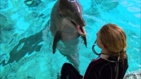 super_smart_dolphin_answers_questions_-_extraordinary_animals
