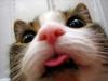 Tęcza horyzontalna w Paryżu