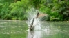 flying_foxes_vs_freshwater_crocodile_-_lands_of_the_monsoon_-_bbc