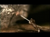fastest_animals_on_earth_in_slow_motion