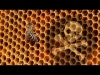 Tainted honey: Deadly pesticides show up in honey all around the world